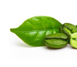 Extracto Glicólico Café Verde