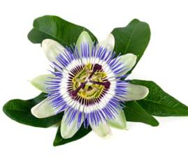 Extracto Fluido de Pasiflora