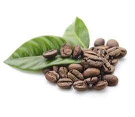 Extracto Seco de Café Verde